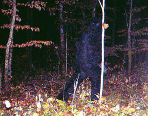 20091210_111253_bigfoot1211[1]_300